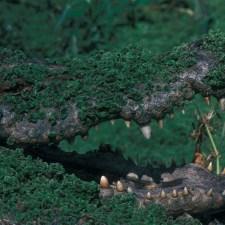 croc-jpg